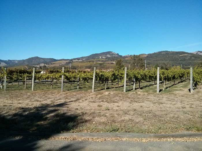 Loxton Cellars vineyard