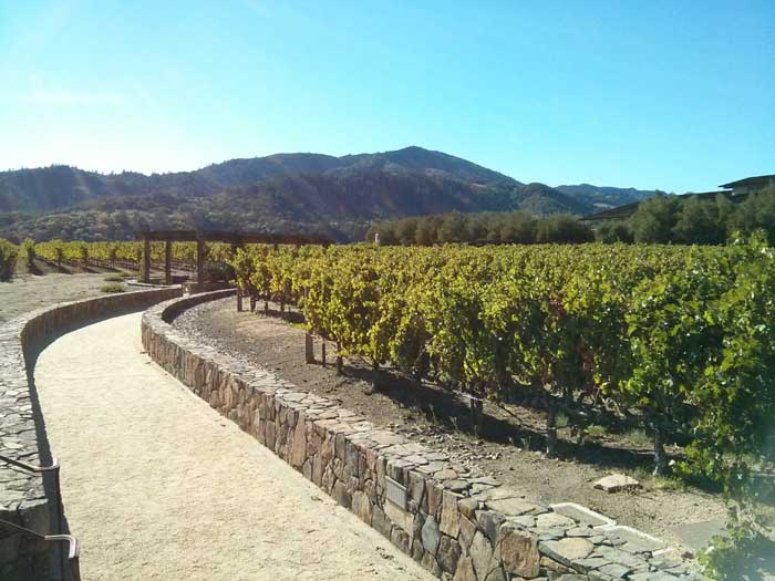 Vineyards at Robert Mondavi Winery