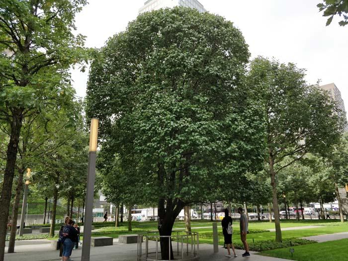 9-11 Memorial Garden #8