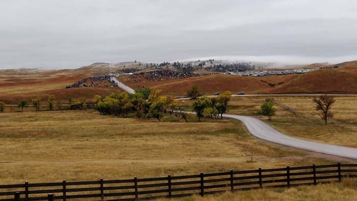 Buffalo Roudup South Viewing Area