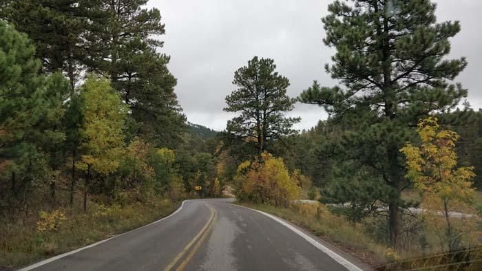 On the North Wildlife Loop Road #2
