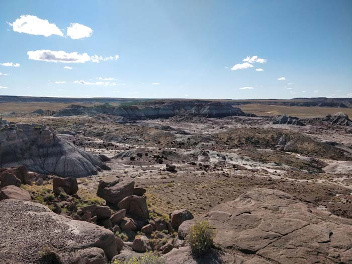 Jasper Forest, Petrified Forest #1