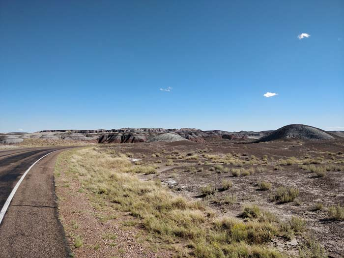 Petrified Forest #1